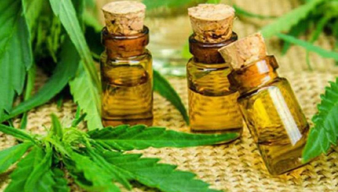 La Secretaría de Salud publica el reglamento para el uso medicinal del  Cannabis - Revista Única por Cinco Mujeres